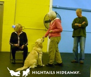 Positive dog care at Hightails now includes positive dog training!
