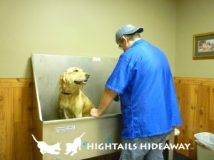 Dog Grooming appointments available at Hightails Hideaway.