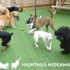hightails daycare 3.12